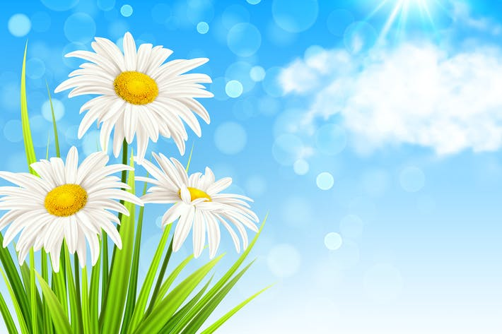Thumbnail for White Daisy Flowers and Green Grass