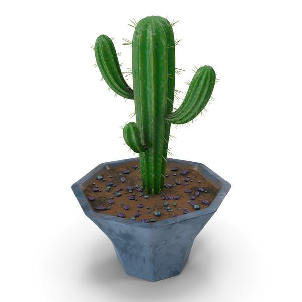 Thumbnail for Cactus Blue Candle Single Pot
