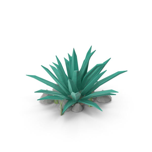 Thumbnail for Cactus with Rocks