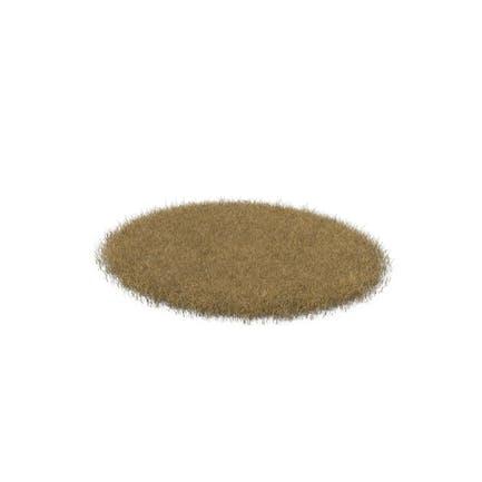 Dead Grass Patch