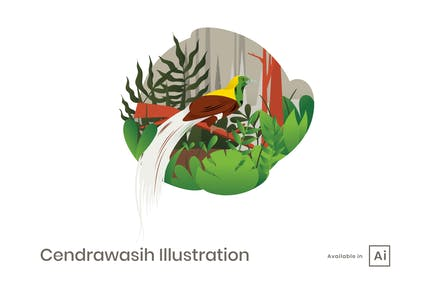 Cendrawasih Illustration