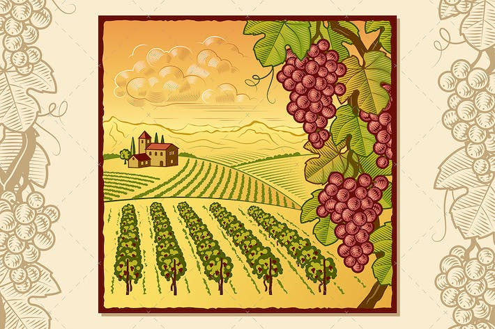 Cover Image For Vineyard Landscape