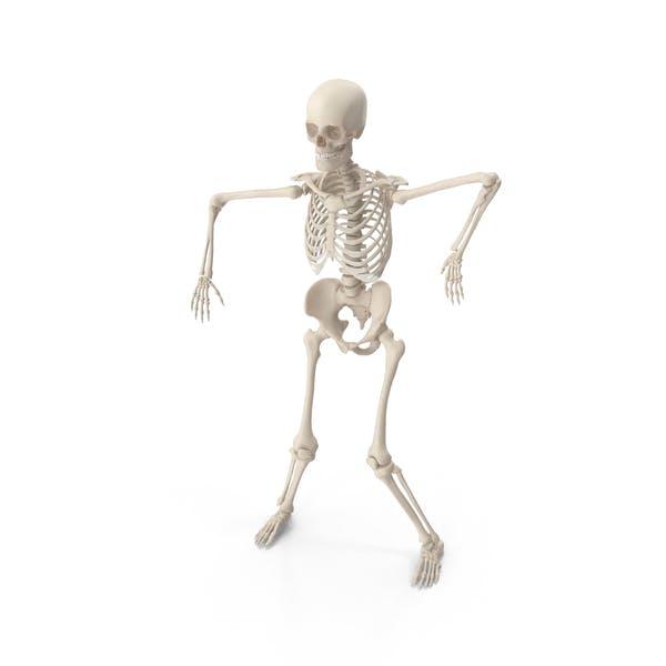 Thumbnail for Skeleton Robot