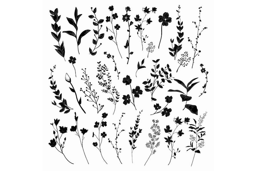 Black Hand Drawn Herbs, Plants and Flowers.