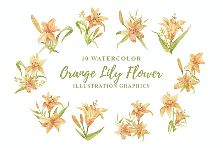 Thumbnail for 10 Watercolor Orange Lily Flower Illustration
