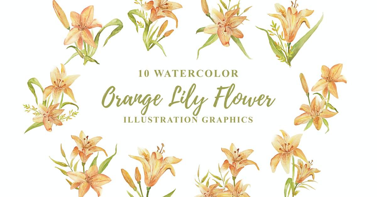 Download 10 Watercolor Orange Lily Flower Illustration by IanMikraz