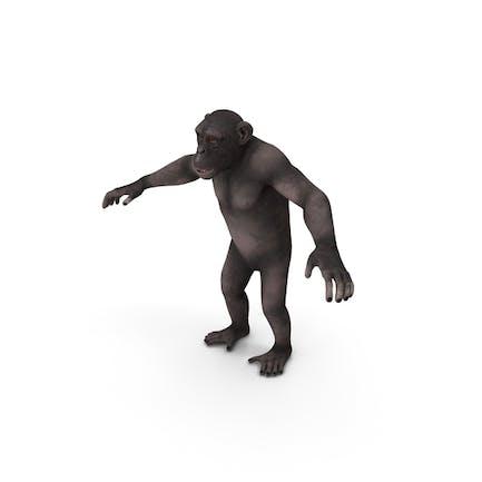 Dark Chimpanzee