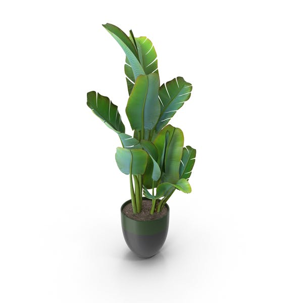 Cover Image for House Plant
