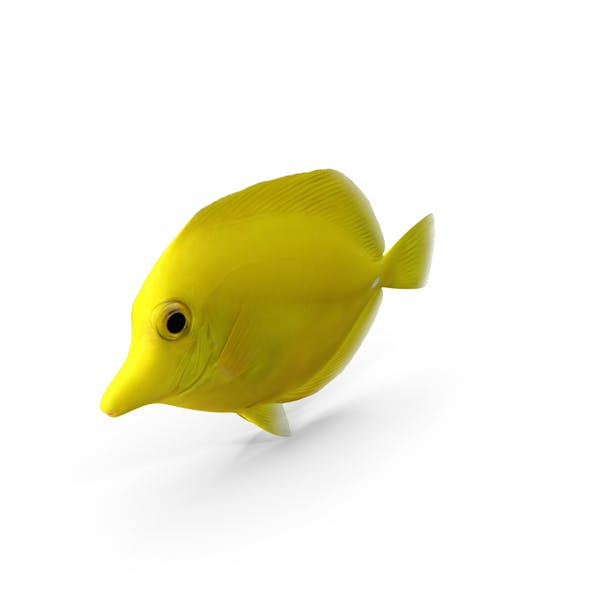 Thumbnail for Yellow Tang