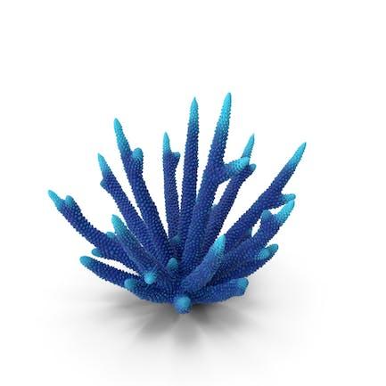 Azul Coral