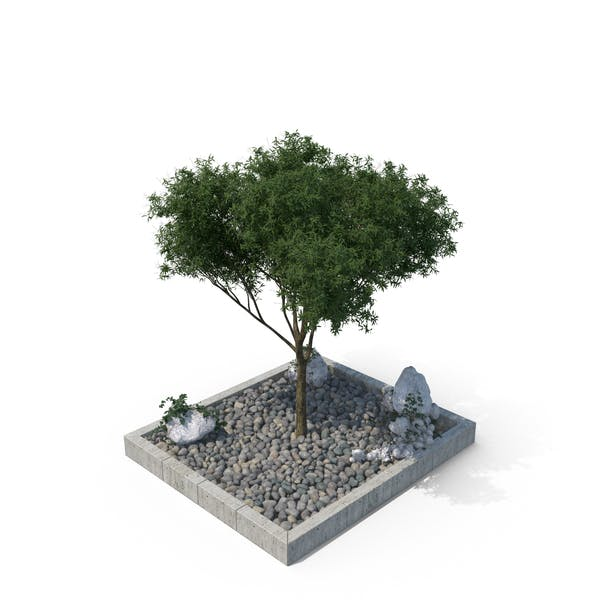 Tree in Gravel Filled Pit