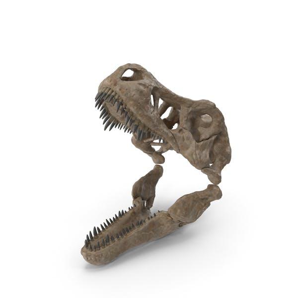 T Rex Skull Fossil