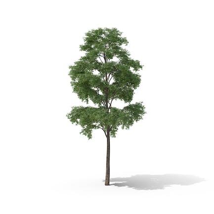 Aufzählungsbaum