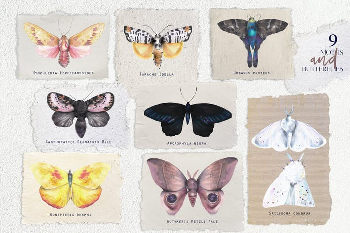 Watercolor vintage moths and butterflies set