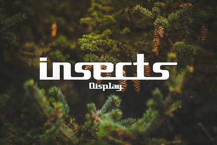insects Display