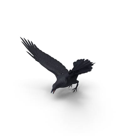 Crow flatternde Flügel