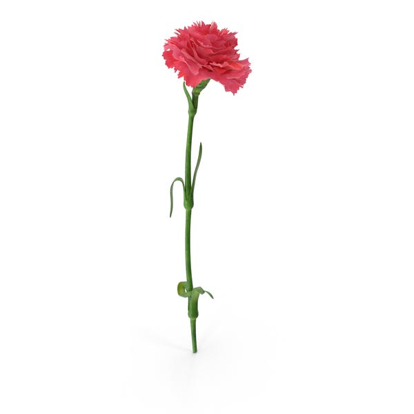 Cover Image for Carnation