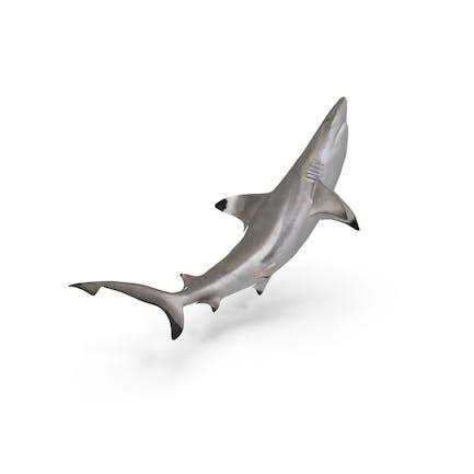Tiburón de arrecife de punta negra