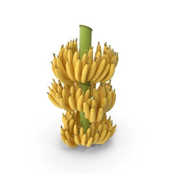 Reife gelbe Bananen-Cluster