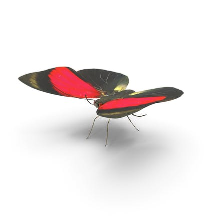 Agrias Claudina Butterfly