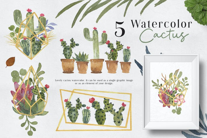 Cover Image For Ofi 5 Watercolor Cactus Graphic