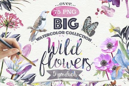 Wildblumen Sammlung 75 PNG