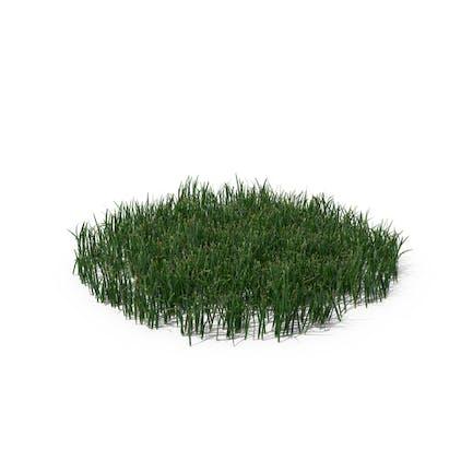 Einfaches Gras (groß)