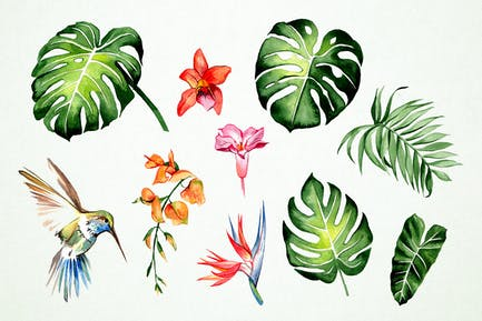 Tropical Notes Clipart