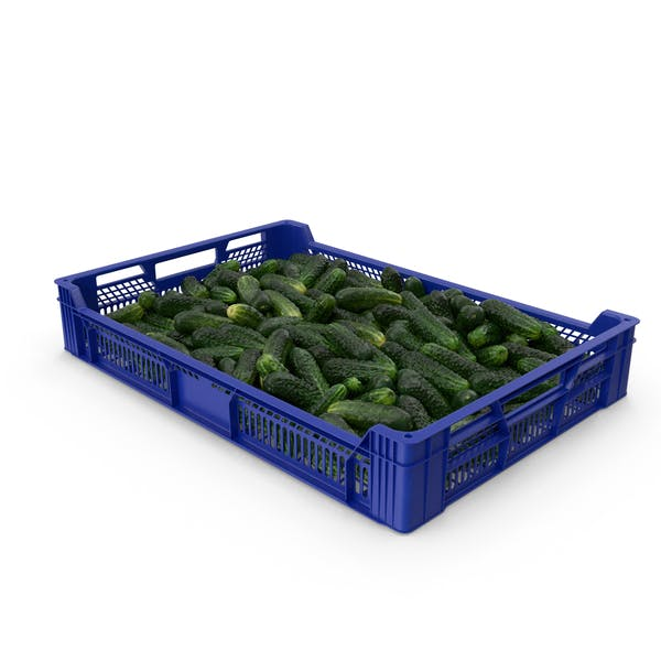 Postharvest Tray With Kirby Cucumbers