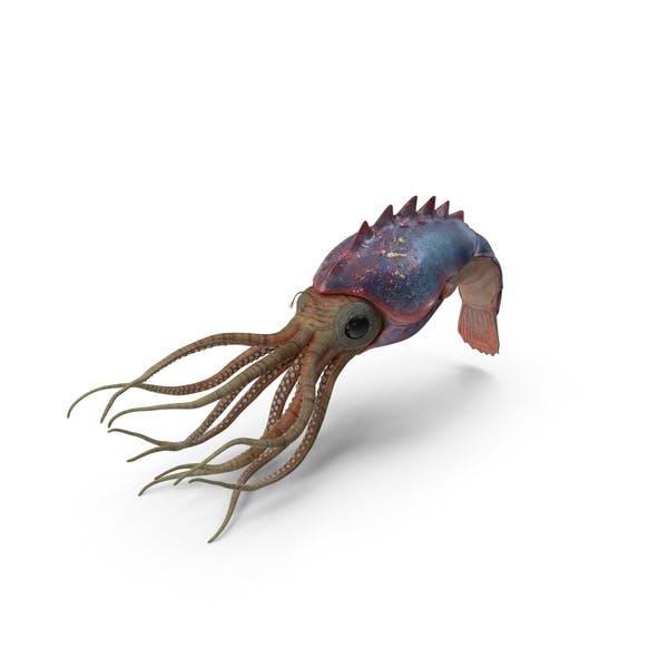 Thumbnail for Cephalopod