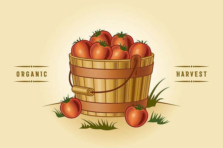 Thumbnail for Retro Bucket Of Tomatoes