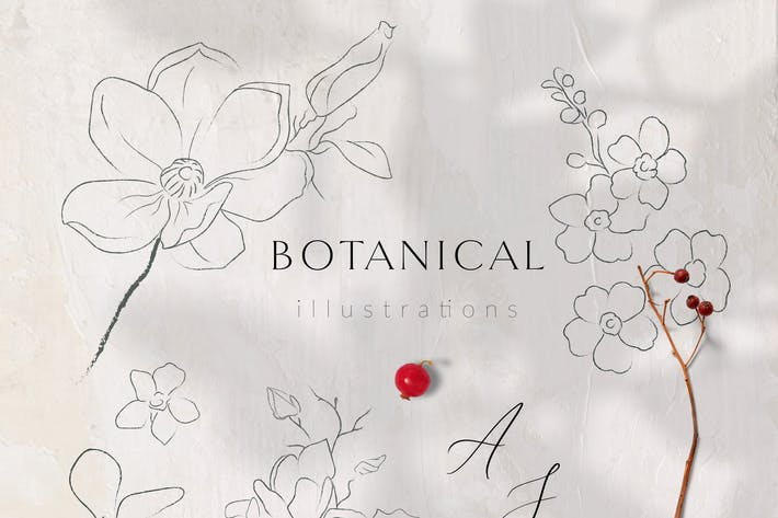 Thumbnail for Line Drawing Botanicals, Plants, Florals