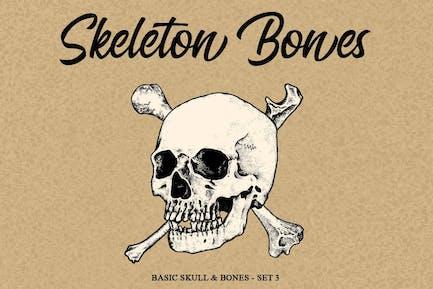 Skeleton bones set 3