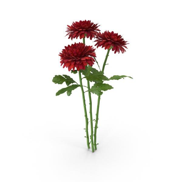 Thumbnail for Chrysanthemum Bouquet