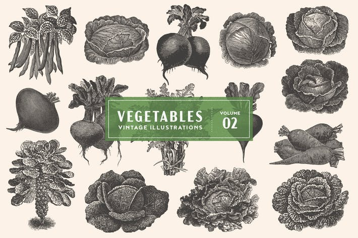 Thumbnail for Vintage Vegetable Illustrations Vol. 2