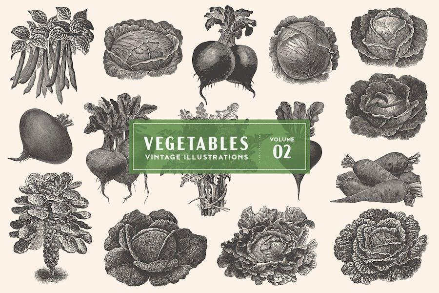 Vintage Vegetable Illustrations Vol. 2