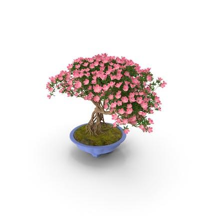 Árbol de bonsai verde miniatura con flores en maceta