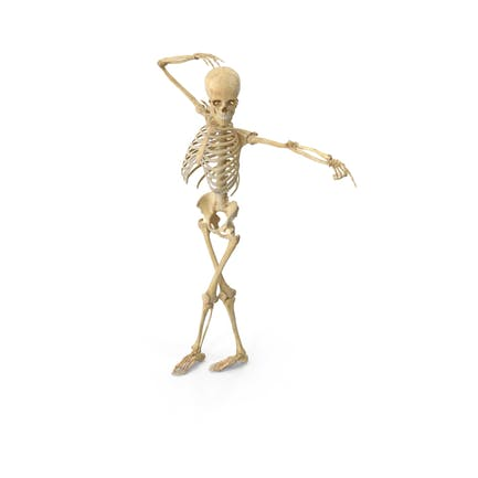 Echte menschliche weibliche Skelett-Pose