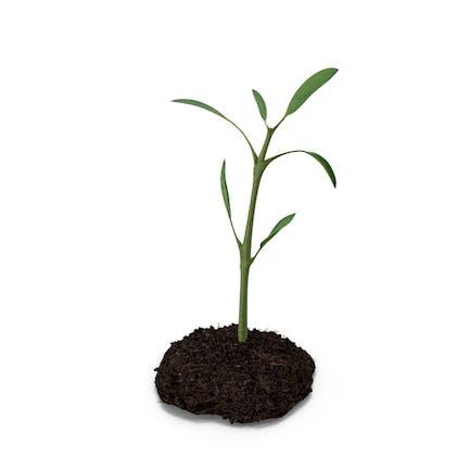 Plant Ground