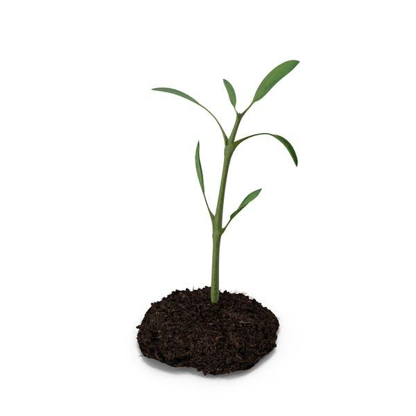 Planta de tierra