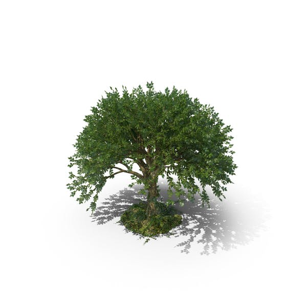 Thumbnail for Дерево
