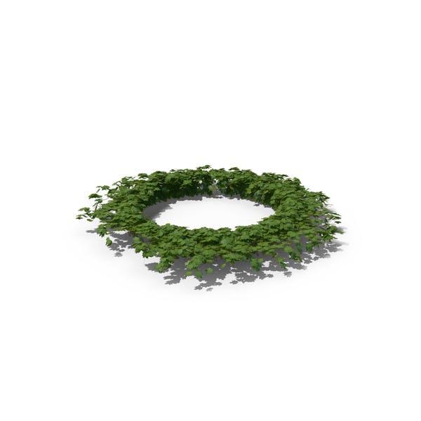 Thumbnail for Ivy Circle