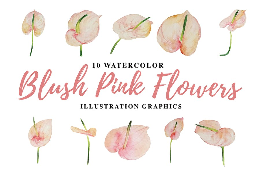 10 Watercolor Blush Pink Flowers Illustration