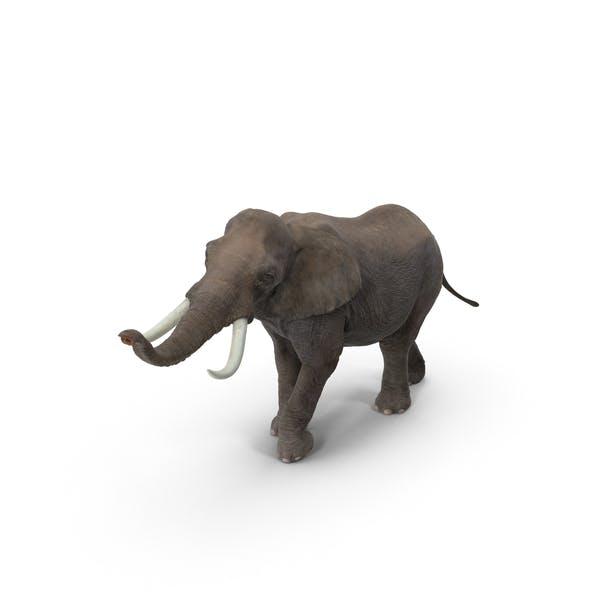 Thumbnail for Elephant