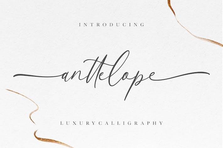 Caligrafía de lujo de Anttelope