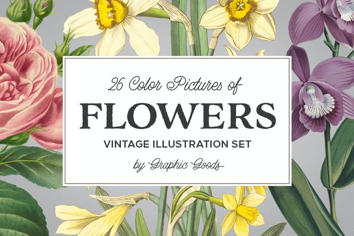 Cover Image For Vintage Illustrations of Flowers