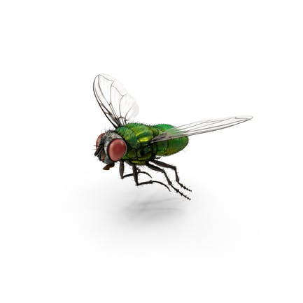 Grüne Flasche Fliege