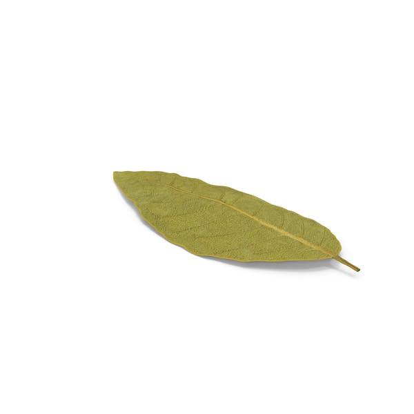 Dried Bay Laurel Leaf