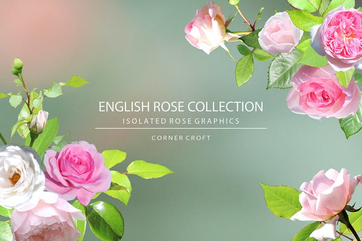 Thumbnail for English Rose Collection