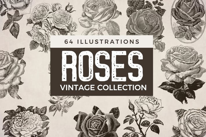 Thumbnail for Vintage Roses - Illustration Collection